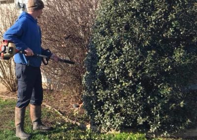 Trimming shrubs